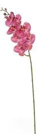 Home4you Bouquet Orchid In Garden H85cm Dark Pink 83874