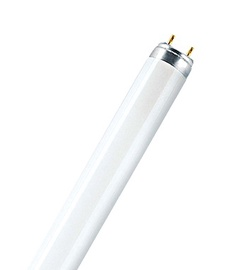Liuminescencinė lempa Narva T8, 36W, G13, 3000K, 3350lm