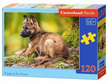 Castorland Puzzle Puppy In The Forest 120pcs