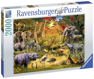 Puzle Ravensburger Gathering At The Waterhole 167029, 2000 gab.