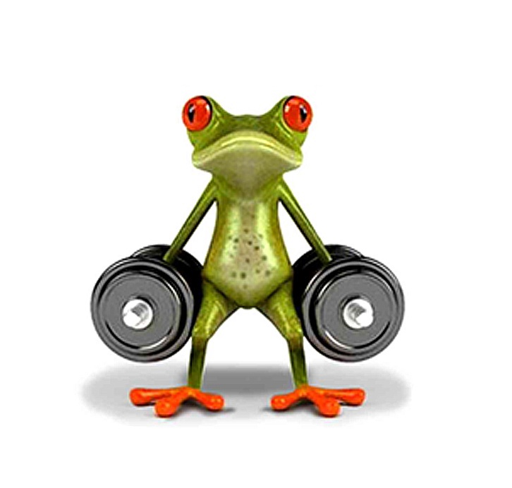 SN Car Sticker Frog
