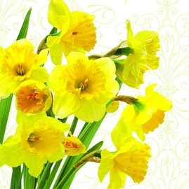 Paw Decor Collection Yellow Daffodils 33 x 33cm