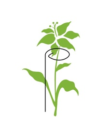Augalų laikikliai, metaliniai, žali, 3 vnt, 80 cm