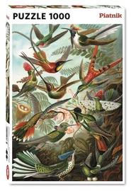 Piatnik Puzzle Humming Birds 1000pcs