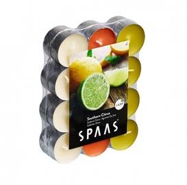 Ароматическая свеча Spaas Southern Citrus, 4.5 h