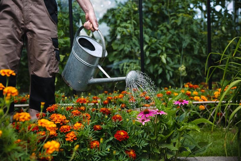 Trąšos organinės gėlėms Nord Organics Plant Probiotic, 6ml
