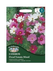 KOSMEJAS Dwarf Sonata Mixed