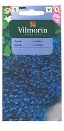 Seemned lobeelia Blue Carpet