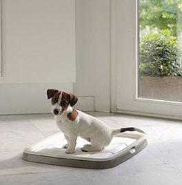 Savic Puppy Trainer Starter Kit Medium