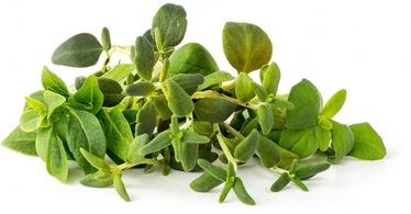 Семена для умных садов Click & Grow, разные растения, 9 шт.