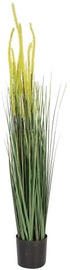 Home4you Bouquet Herbarium With Pot In Garden H100 Light Yellow 83836
