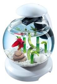 Akvariumas Tetra Cascade Globe, baltas, 6.8 l