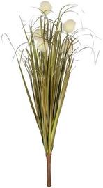 Home4you Bouquet Herbarium 5pcs In Garden H59cm White 83851