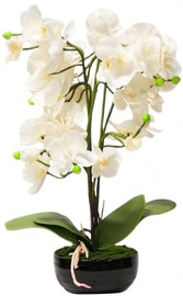 Home4you White Orchid 3 Knotted H48cm