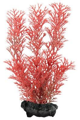 Tetra Red Foxtail XL