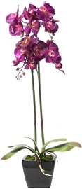 Home4you Orchid 2 Double Knotted H78cm Purple 72692