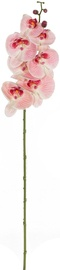 Home4you Bouquet Orchid In Garden H85cm Light Pink 83872