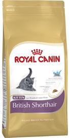 Royal Canin FBN Kitten British Shorthair 2kg