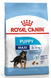 Sausas ėdalas šunims Royal Canin Maxi Junior, 4 kg