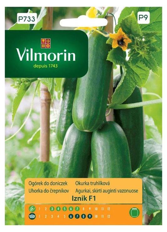 Gurķu sēklas Vilmorin, audzēšanai podos
