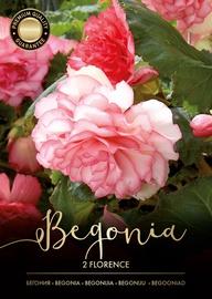 BEGONIJAS FLORENCE SARKANAS/BALTAS 4/5