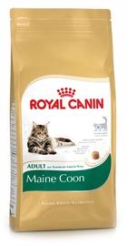 Sausas ėdalas katėms Royal Canin Main Coon Adult, 2 Kg