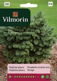 Duglāzijas koka sēklas Vilmorin
