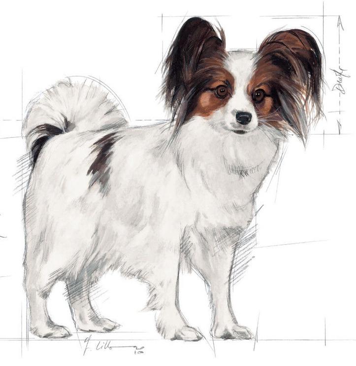 Sausas ėdalas šunims Royal Canin X-Small Adult, 1.5 kg