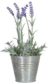 Home4you Lavender In Garden H25cm Purple 83822