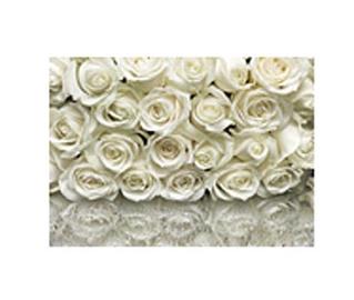 Fototapetai Komar La Rose, 98314 A, 368 x 254 cm