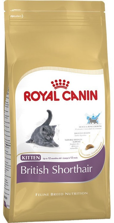 Royal Canin FBN Kitten British Shorthair 10kg