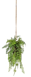 Home4you In Garden Hanging Plant In Pot Small