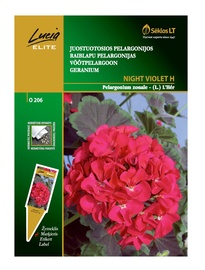 Raiblapu pelargonijas sēklas Lucia Elite Night Violet H