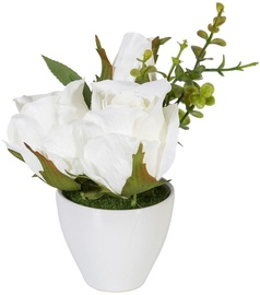 Home4you Roses In Garden With White Pot H15cm White
