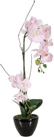 Home4you Orchid 2 In Garden H50 73738 Light Pink