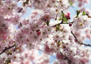 Fototapete ar ziediem, 3.68x2.54 m