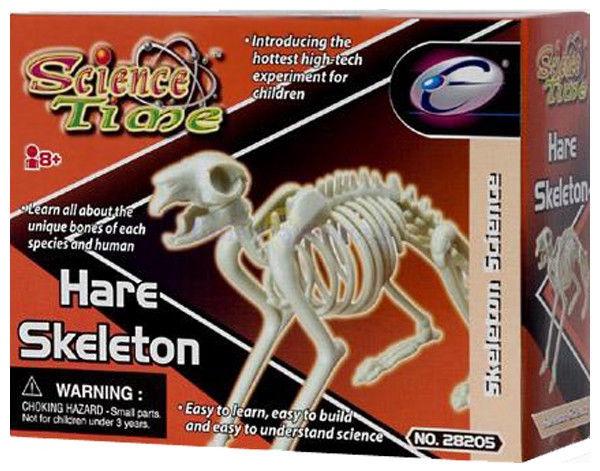 Eastcolight Hare Skeleton 28008/28205