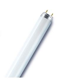 Liuminescencinė lempa Osram T8, 30W, G13,