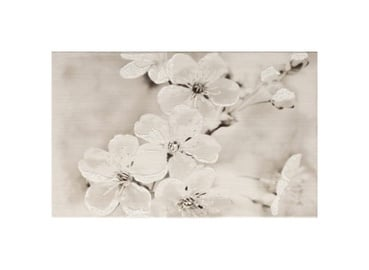 Keraminės dekoruotos sienų plytelės Gryfin Insert Flower, 50 x 20 cm