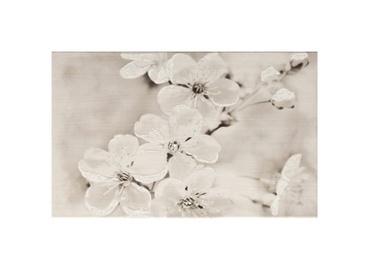 Keraminės dekoruotos sienų plytelės Gryfin Insert Flower, 25 X 40 cm