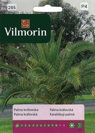 Karalisko palmu sēklas Vilmorin