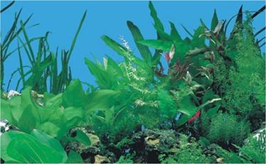 Boyu Plastic Background J03 50cm