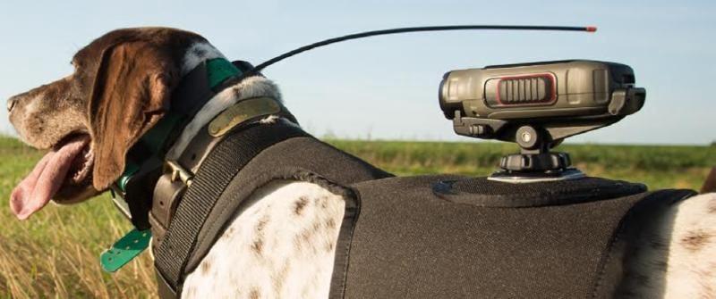 Garmin Dog Harness Long