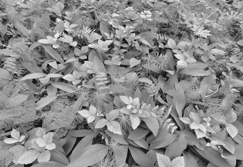 Fototapetai Sunny decor SD914, 368 x 254 cm