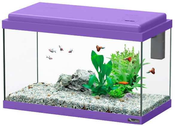 Aquatlantis Funny Fish 50 Purple