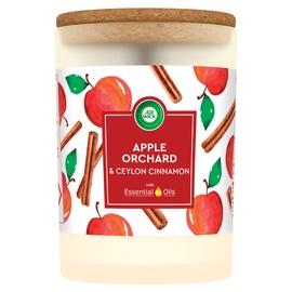 Ароматическая свеча Airwick Apple Orchard, 185 г