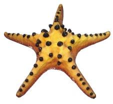 Boyu Aquarium Ornament RS-018B