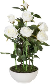 Home4you Roses In Garden With White Pot H53cm White