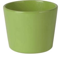 Lillepotiümbris Priimula 12x9cm roheline