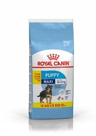 Sausas ėdalas šunims Royal Canin Maxi Junior, 15+3 kg
